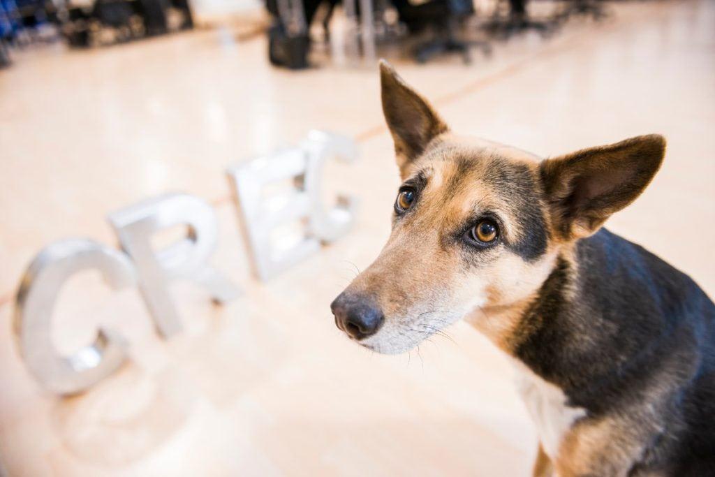 Las oficinas dog-friendly mejoran la productividad y reducen el estrés